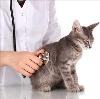 Ветеринарные клиники в Высоцке